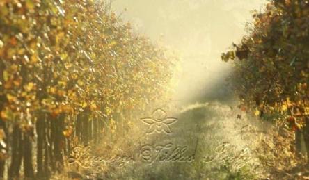 Vineyard: Outside view