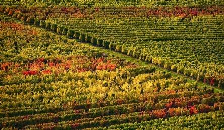 Azienda vinicola: Vista esterna
